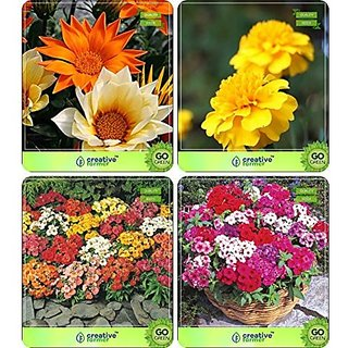 Flower Seeds : Plant Seeds Outdoor Combo Gazania-Dwarf , Marigold-Yellow , Nemesia, Phlox Beauty Garden Flower Seeds Pack By CreativeFarmer
