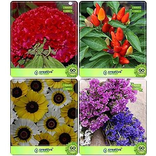 Flower Seeds : Quick Blooming Flower Mix Combo Celosia Cockscomb, Ornamental Chilly, Carinatum, Corn Flower Garden Flower Seeds Pack By CreativeFarmer