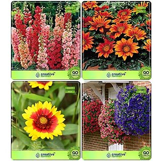 Flower Seeds : Seeds For Terrace Garden Combo Larkspur-Rose Smile, Gazania-Sunshine, Gaillardia, Petunia- Blue Garden Flower Seeds Pack By CreativeFarmer