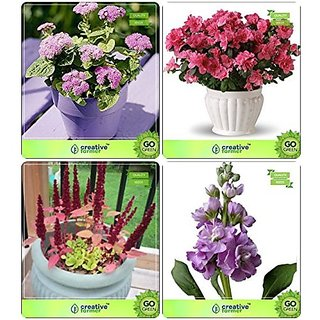 Flower Seeds : Outdoor Seeds Gardening Combo Ageratum , Godetia, Amaranthus Pygmy, Stocks Garden Flower Seeds Pack By CreativeFarmer