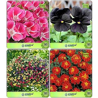 Flower Seeds : Garden Flower Seeds Winter & Winter/Summer Combo Clarkia Elegans, Pansy-Black, Petunia-Star , Marigold-Bolero Red Flower Seeds Pack By CreativeFarmer