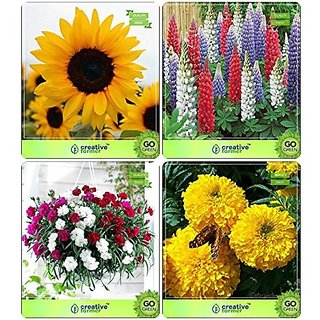 Flower Seeds : Flower Seeds For Containers Combo Sunflower Giant, Lupin-Pixie Delight Dwarf , Carnation , Marigold-Yellow Garden Flower Seeds Pack By CreativeFarmer