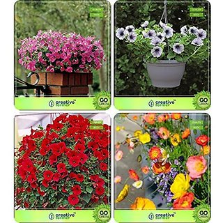 Flower Seeds : Seeds For Garden Plants Combo Petunia-Rose , Petunia- Blue , Petunia-Scarlet, Papaver Garden Flower Seeds Pack By CreativeFarmer