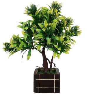 carmer 3 head bonsai plant