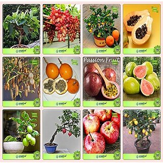 Bonsai Suitable Seeds : Garden Plant Seeds Combo English Walnut, Murrayya Exotica, Lagerstroemia , Peltophorumalbizia Saman,Apple,Passion Fruit - Violet,Anona ,Elephant-Ear Garden Seeds Pack By Creativefarmer