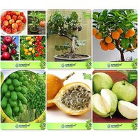 Bonsai Suitable Seeds : Seed Of Ing Plant Combo Apple, Grape, Orange, Papaya,Passion Fruit - Yellow,Thailand Guava Garden Seeds Pack By Creativefarmer