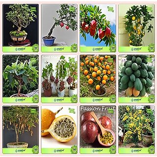 Bonsai Suitable Seeds : Seed For Garden Combo Guava , Pomagranate , Apple, Lemonficus Religiosa,Grape,Orange,Papaya,Tamarind Garden Seeds Pack By Creativefarmer