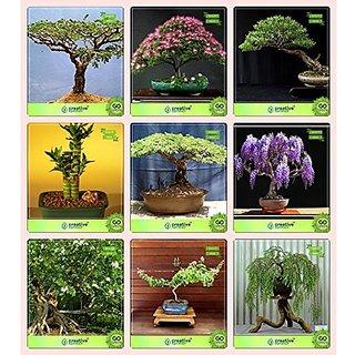 Bonsai Suitable Seeds : Bonsai Suitable Plant Seeds For Home Garden Combo Acacia Dealbata , Albizia Lebbeck , Eucalyptus , Bamboo Gulmohar,Jacaranda,Murrayya Exotica,Lagerstroemia ,Peltophorum Garden Seeds Pack By Creativefarmer