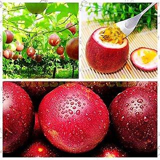 Fruit Seeds : Exotic Purple Fruit Climber Fruit Seeds - Passion Fruit - Hyb Fruit Seeds ForPot Fruit Seeds Kitchen Garden Pack By Creative Farmer