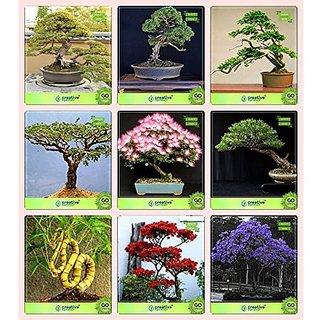 Bonsai Suitable Seeds : Bonsai Suitable Plant Seeds For Home Garden Combo Podocarpus Gracillior , Bald Cypress, Thuja Orientalis , Acacia Dealbata Albizia Lebbeck ,Eucalyptus ,Bamboo ,Gulmohar,Jacaranda Garden Seeds Pack By Creativefarmer