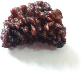1 mukhi rudraksha 100 original  natural java beads by lab certified