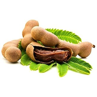 Fruit Seeds Tamarind, Imli Or Tamarindus Indica Tree Seeds For Small Pots Fruit Seeds Kitchen Garden Pack By Creative Farmer