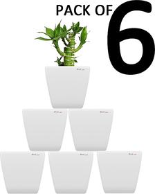 Yuccabe Italia Pack Of 6 Stella (White Planters)