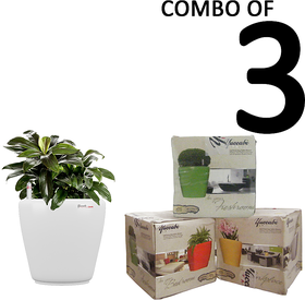 Yuccabe Italia Combo For 3 Stoic (White Self Watering Planters)