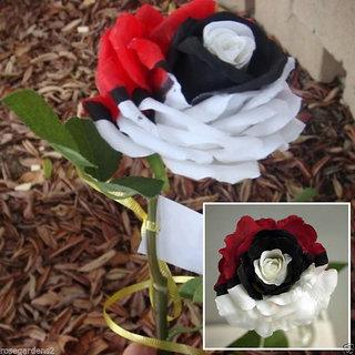 NEW 10 Pcs Splendid Rare Red White Rose Flower Seeds Beautiful Plant Garden