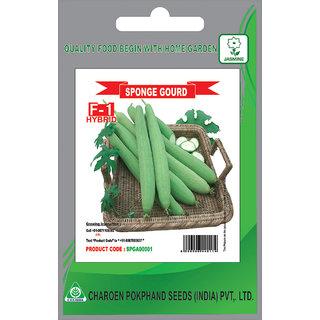 SPONGE GOURD F1 HYBRID VEGETABLE SEEDS (Pack of 15 Seeds) BY C.P.SEEDS INDIA