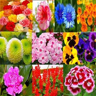 Beautiful Winter Season Flower Plant Seeds Combo 10 Types