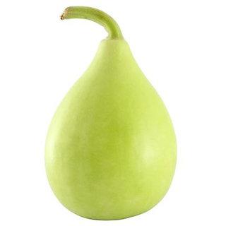 Bottle Gourd Bulb Seeds, GMO Free, Non-Hybrid Lauki Vegetable Seeds Pack of 20 Seeds