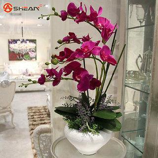 Seeds-Pink Orchid Rare Bonsai Plant Phalaenopsis 10 Pcs