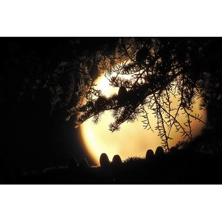 tree with a full moon |wall poster(size:12x18 inch) |Sticker Paper Poster, 12x18 Inch