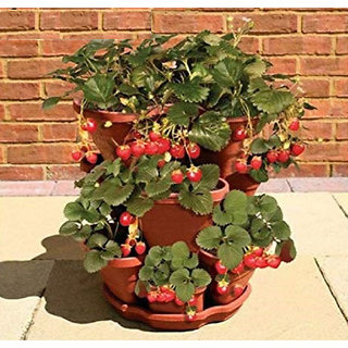 ENORME 300Pcs Fruitful Strawberry Plants Outdoor Strawberry Tree Plants Delicious Organic Fruit Plants Home Garden Plants Courtyard Plant