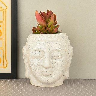 Mft Peaceful Succulent