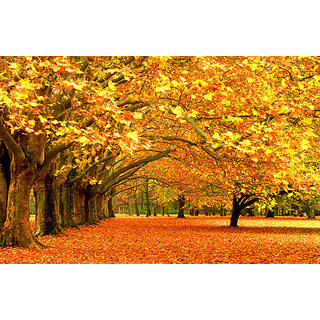 Maple Tree with Falling Leaves Printed Wallpaper 5ft x 5ft
