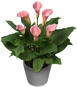 Plant House Plastic Live Pink Peace Lily Plant With Pot- Decorative Plant
