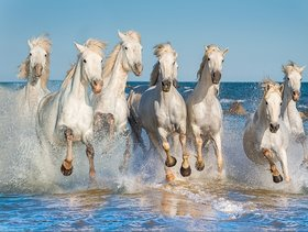 Style UR Home - White Seven Horses running on Water - 18 x 24