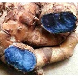 Urancia Farm Fresh Kali Haldi Black Turmeric For Plantation 5 Pcs