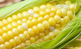 SM Farm Seeds Hybrid Maize Sweet Corn One Packet Seeds Seed (50 Per Packet)