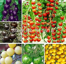 6 kinds of different tomato seeds mixed seeds