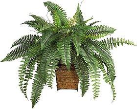 Modern Plants Live Fern Air Purifier Plant With Pot - Decorative Plant