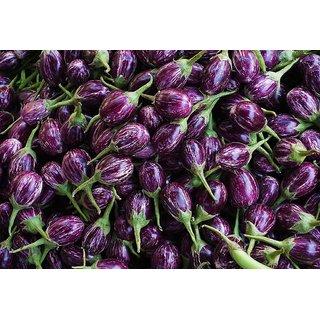 Dioart Brinjal Hybrid Seeds-60