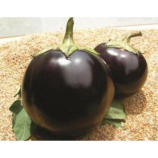 Dioart Brinjal Hybrid Seeds-78