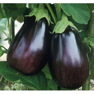 Dioart Brinjal Hybrid Seeds-968