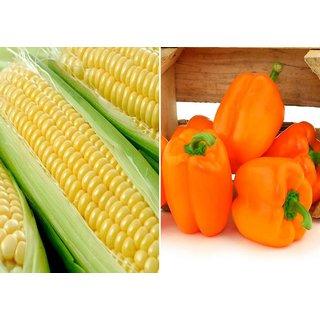 Dioart Corn Seeds-1281