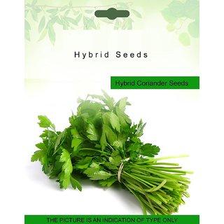 Dioart Coriander Seeds-79