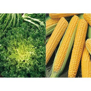 Dioart Corn Seeds-1302
