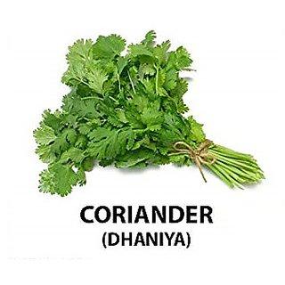 Dioart Coriander Seeds-91