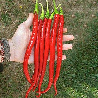 Dioart Chilli Seeds-772