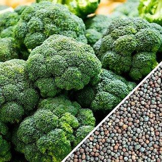 Dioart Broccoli Seeds  50 SEEDS 385