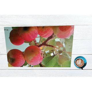 Valtellina Digital Printed PVC Dining table 6 Placemats