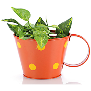 Going Greens Orange Single Metal Cup Shape Planter with Polka Dot