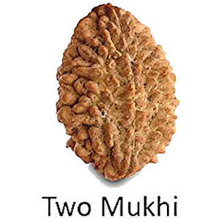 Rudraksh Rudraksha 2 Mukhi (Face) Beads A++ QUALITYENERGIZED
