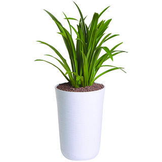 Sereno Bello Plastic Flower Pot Round Planter (13 X 20) in White Finish (planters pot,planters for balcony, flower vase)