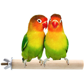 6 Inches / 15 cm Natural Habitat Wooden Perch / Stand / Toy for Birds (Light Weight)