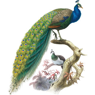 Walltola Nature PVC Multicolor Peacock  Wall Sticker 84 x 88 cm (No. of Piece- 1)