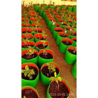Grow bag - Pack of 2