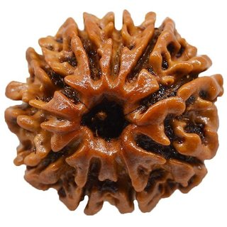 25.75mm 100% Natural (Ten face Rudraksha) 10 Mukhi Rudraksha  Nepal Bead Lab Certified